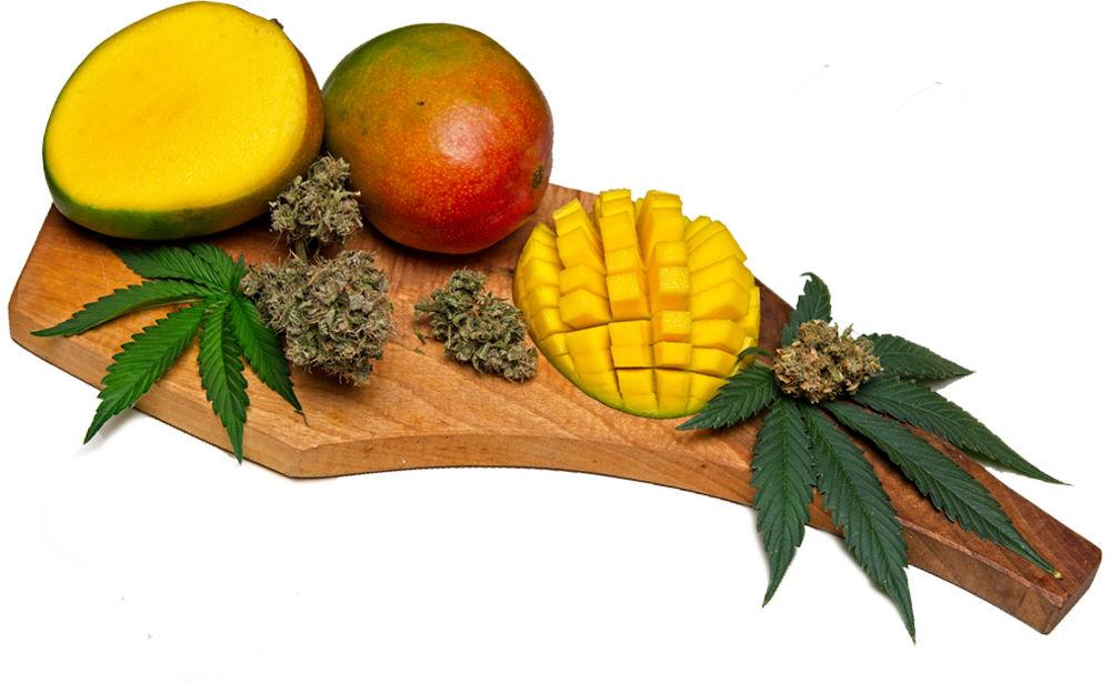 Cutting board with chopped mango and marijuana leaf and dried flowers