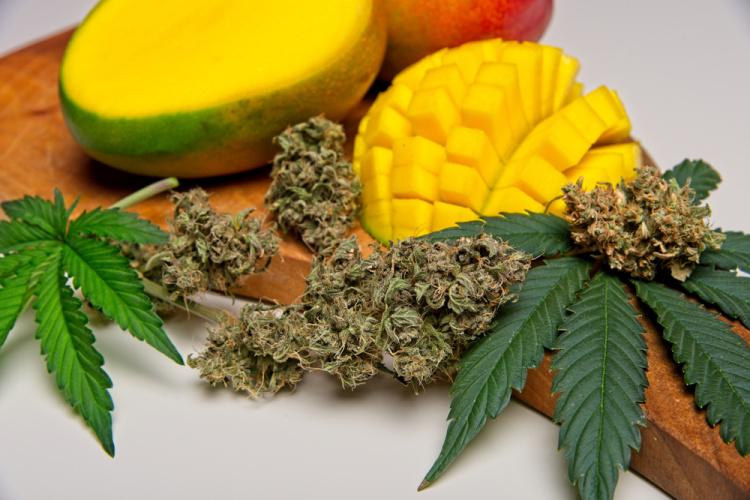 Glen Burnie marijuana dispensary 1